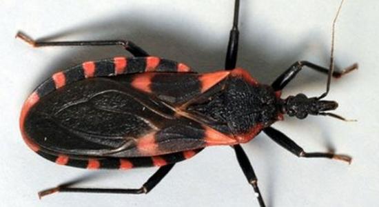 Chagas2