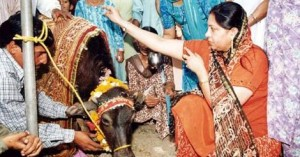 Dalits worshipping the buffalo before participating in a conversion ceremony at Balmiki Ashram on the occasion of the 112th birth anniversary of Ambedkar, in Chandigarh in April 2003. The converts, mostly scavengers, vowed to worship the buffalo instead of the cow. Photo:PTI